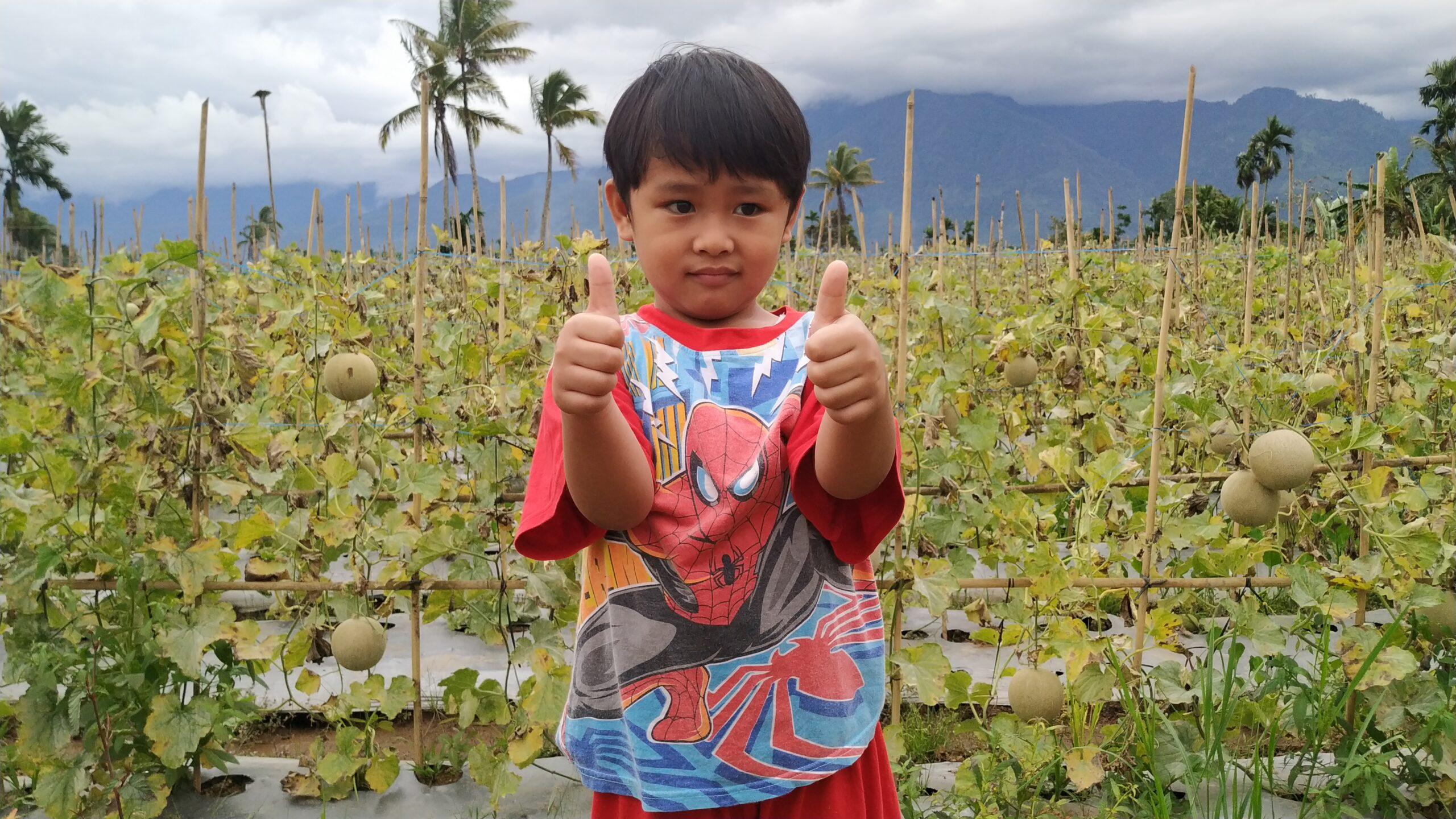 Kebun Melon Di Lebong, Mendadak Viral Jadi Agrowisata