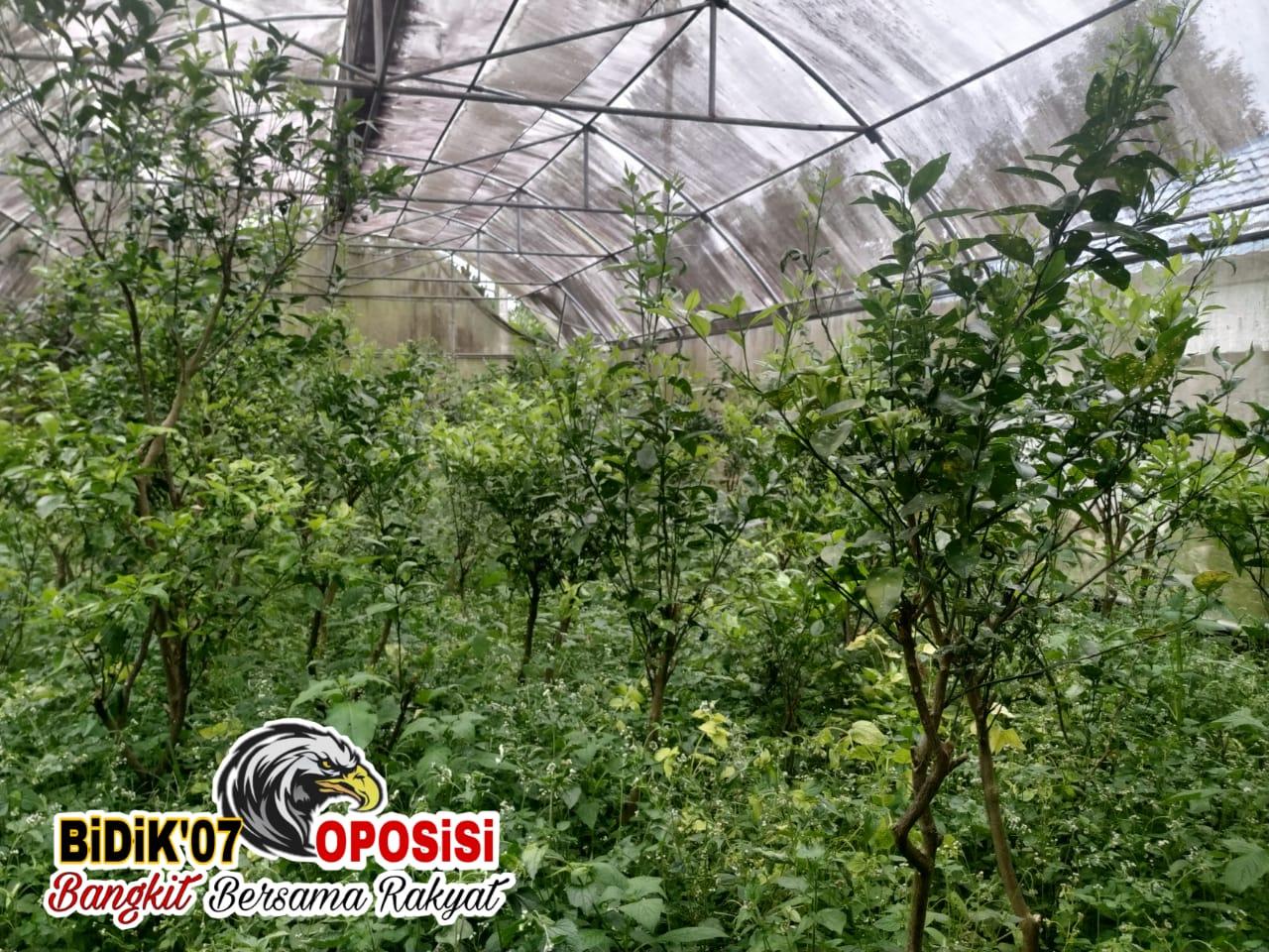 "UPTD BBI Hortikultura ""Galau,"" Bupati Kopli Ansori ""Melancong"" ke Pusat"