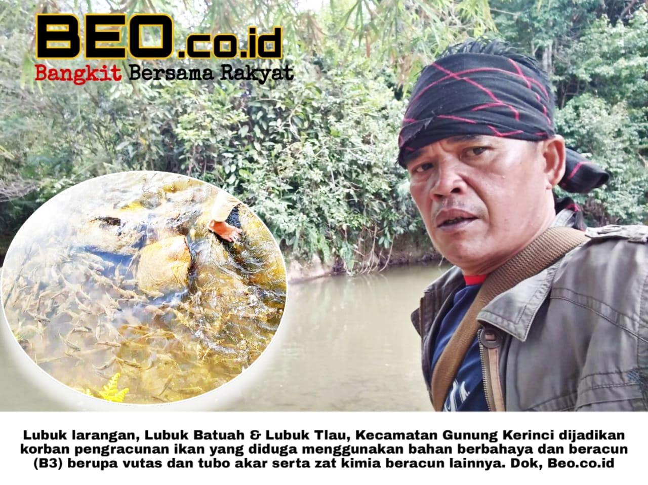 Diduga Gunakan B3, Puluhan Ribu Ikan Mati Sepanjang Sungai Batang Merao Kerinci