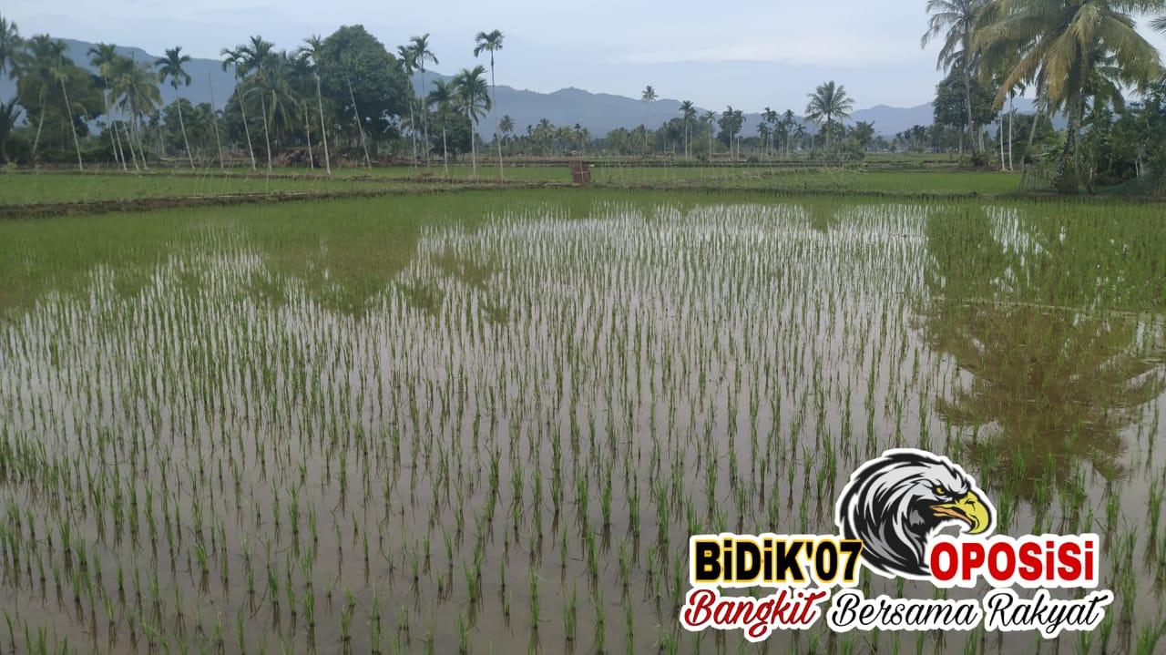 Hanya Rp 3,6 M, Dana APBN Dukung Rehab 10 Paket Daerah Irigasi Lebong